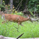 Dave Wolf: Pa. limits inline hunting season too much