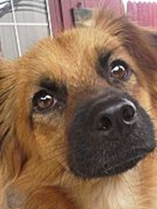 Pet of the Week: Canelo