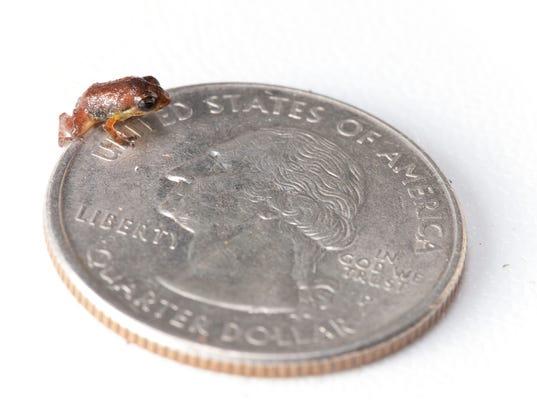 smallestfrog.jpg