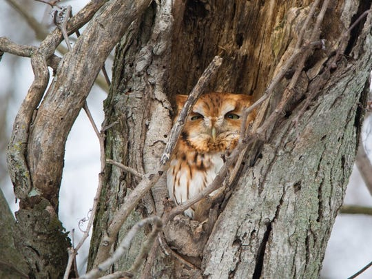 A screech owl nearly brought the author to his knees on the Yellow Breeches Creek.