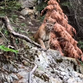 Mountain lion spotted in Sequoia National Park