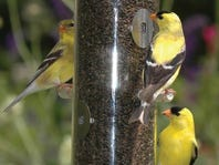 Wild Birds Unlimited Free Bird Food