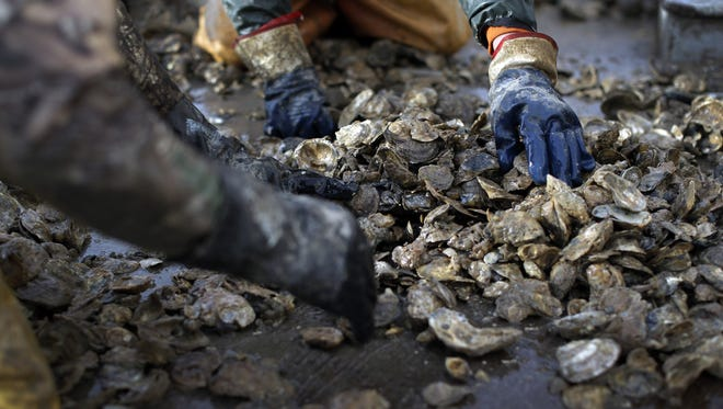 Workers sort through oysters on the deck of the skipjack Hilda M. Willing in Tangier Sound near Deal Island, Md.
