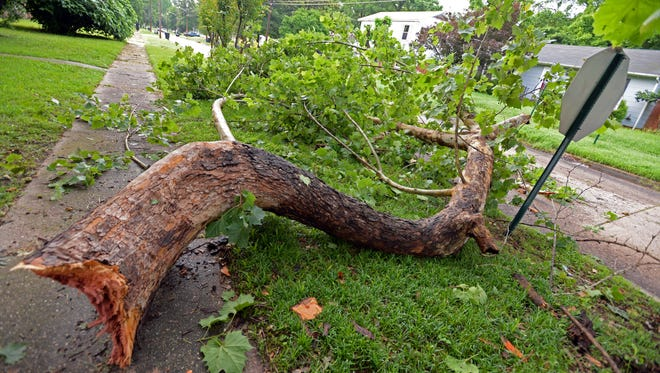 A large branch blocks a portion of East Ratcliff Street following heavy winds and the report of a tornado in the Shreveport area Monday evening.