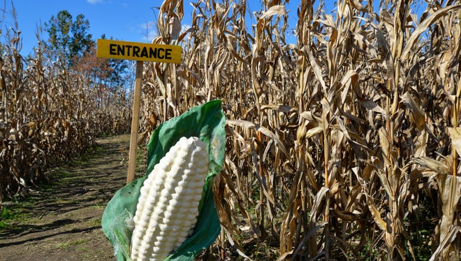 The entrance to the corn maze at Creative Works Farm outside of Waynesboro. The maze is home to Skeeter's Maze Adventure and Twizted Creationz.