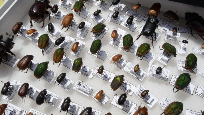 Several typs of beatles were on display at the SciPort Bug Bazaar.
