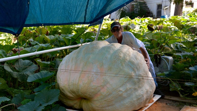 Steve Wright with a 1,400 pound pumpkin at his Waynesboro home on Thursday, Sept. 22, 2016.
