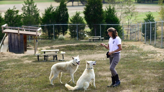 Executive Director Jennifer Ackley works with Spirit, left, and Kimi at the Wolf PAWS sanctuary for wolf-dog hybrids Tuesday, Oct. 4, 2016, near Dandridge. Wolf PAWS, established in 2013 to rescue and provide a sanctuary for abandoned and abused wolf-dogs, is hosting a fundraiser Oct. 22.