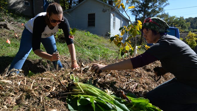 Annette Thomson and Emilie Tweardy work at Lush Farms on Sunday, Oct. 23, 2016. The small lot on Green Street in Staunton is being transformed into a small farm to offer perennial landscape that benefits people, animals, birds and insects.