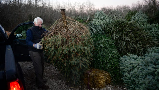 Island Home Park resident Bill Moorefield recycles a Christmas tree on Saturday, Jan. 2, 2016, at Ijams Nature Center. The nature center isn't taking discarded trees this year.