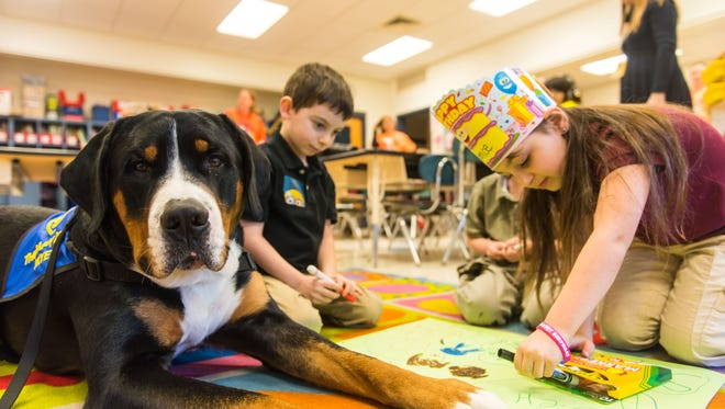 """When not """"working"""" at his day job as Commercial Township School District's therapy dog, Skye, a Greater Swiss Mountain Dog, is busy winning ribbons at dog shows!"""