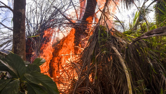 Sword grass crackles and pops after being overtaken by flames during a grassfire near a residential home along Route 17, also known as Cross Island Road, in Santa Rita on Monday, Jan. 22, 2018.