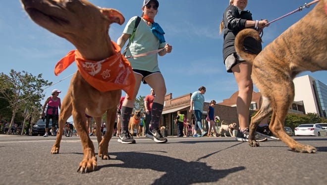Hundreds of animal lovers took to the streets of historic downtown Pensacola Saturday, April 28, 2018 for Paws On Palafox, a family friendly 3K dog walk to support the Barbara Grice Memorial Low Cost Spay and Neuter Clinic at the Pensacola Humane Society.