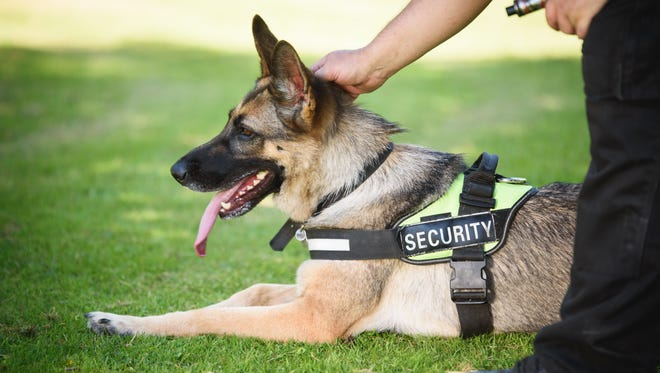 One of the ways to increase security at the hospital is to implement a canine program as part of the security team, and that is exactly what McLaren Greater Lansing has decided to do.
