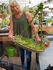 Succulent Gardens employee Simone LaJeunesse, displays a succulent display using an electric fan cover.