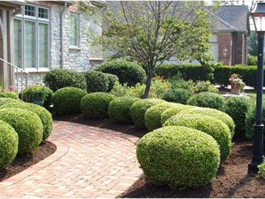 It's OK to dominor shaping of bushes this fall, but don't get carried away.