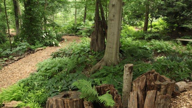 Woodland Fern Tour at Whitehall