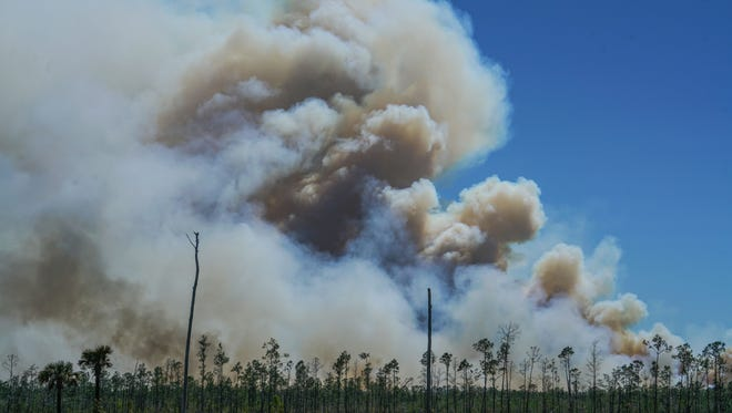 The Greenway Fire burns in Collier County on Thursday, March 22, 2018.