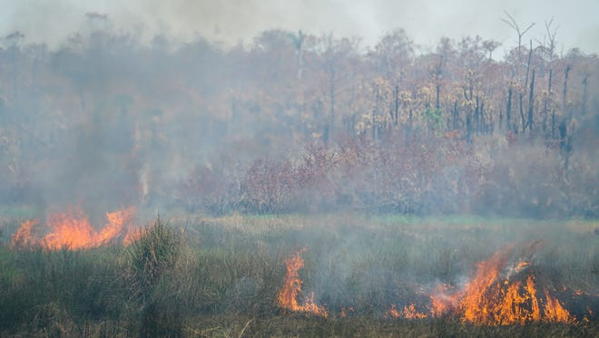 Flames burn along U.S. 41 East on Monday, March 26, 2018. Winds pushed the Greenway Fire south into Collier-Seminole State Park Monday, according to Samantha Quinn, a Florida Forest Service wildfire mitigation specialist and spokeswoman.
