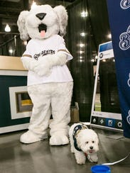 Hank the Ballpark Pup was in such demand, the Milwaukee