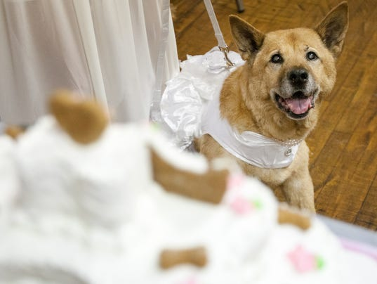 Wags and Whiskers Wedding
