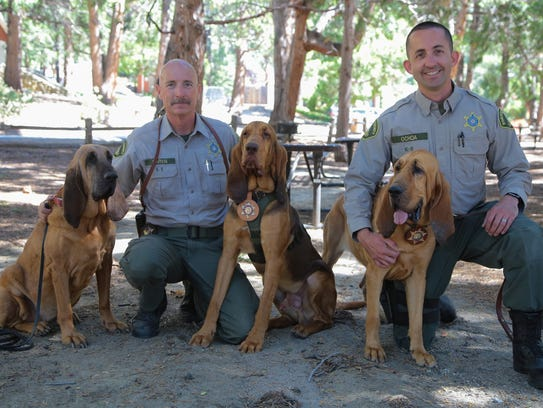 The Riverside County Bloodhound Unit is made up of,