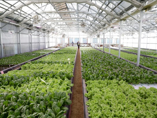 Aquaponics is a combination of hydroponics and aquaculture