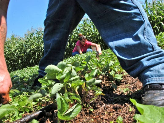 A vegetable garden at John C. Rudy County Park is shown in this file photo.