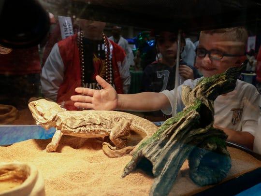Jaxon Acosta looks at an iguana at  L. Leo Judice Environmental