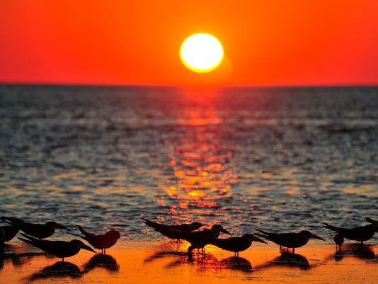 Florida Sunset:    lug1:iStock