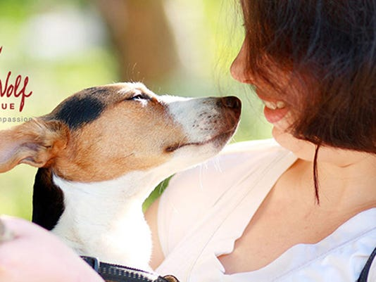 woman-dog-donate-header3.jpg