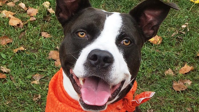 Zip the dog looks forward to meeting his new family and giving them his love.
