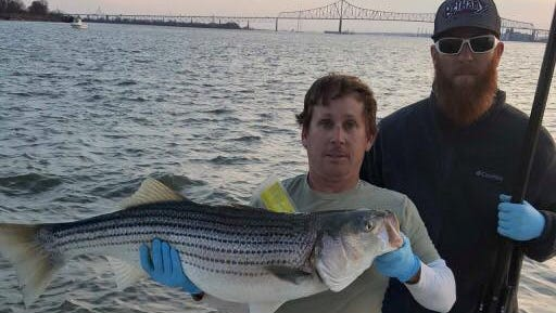 The large striper was caught in the Delaware River.