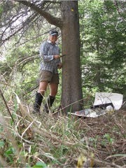 Tabitha Graves of the U.S. Geological Survey puts up barbed wire on a tree. The USGS used bear rub sites to collect hair from which bears could be identified from the DNA.