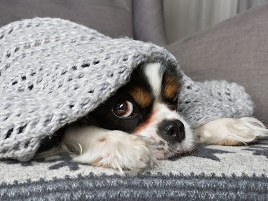 Generic stock image dog in winter cold under blanket