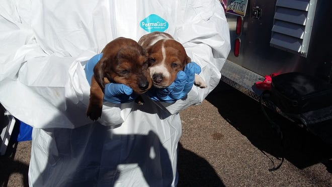 Several dogs, including puppies, were taken from their owners Wednesday in a case investigated by the Maricopa County Sheriff's Office on Nov. 30, 2016.
