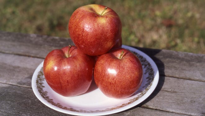 """These honeycrisp apples have become a very popular apple and a best seller. It is often described as """"explosively"""" crisp. Richard Poffenbaugh photo."""
