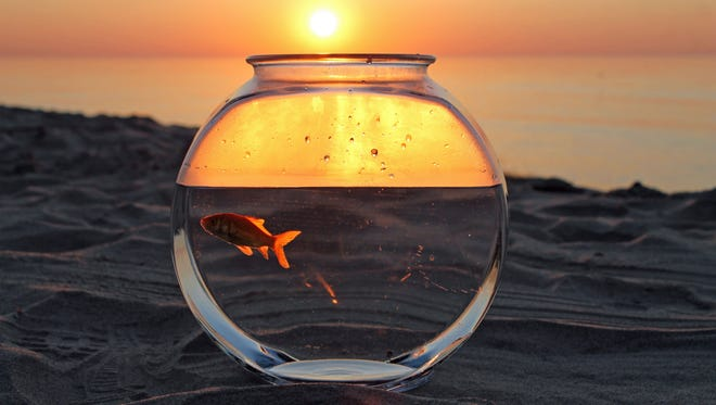 Lucky the goldfish enjoys his first sunrise in Port Washington, Wis.