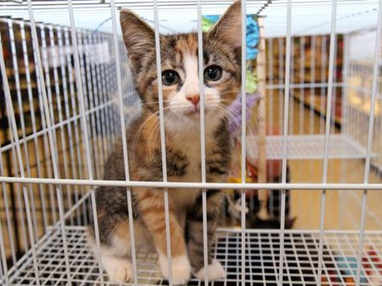It's kitten season and the Mt. Olive TNR Project is looking for fosters for the ones in their care.