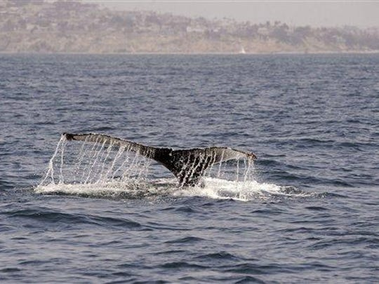 Summer Whale Watch Weekend: Whale watching and education from certified naturalists of the Oregon Chapter ACS about marine animals off the coast, 10 a.m. to 1 p.m. Saturday to Sunday, July 28-29, Boiler Bay State Park, Depoe Bay. Free.