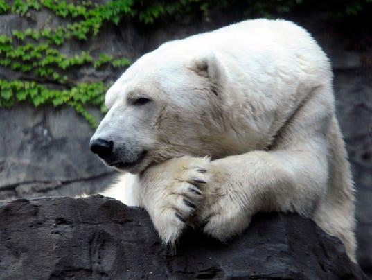 Polar Bear Dies