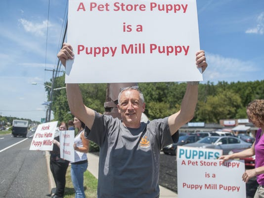 puppy protest