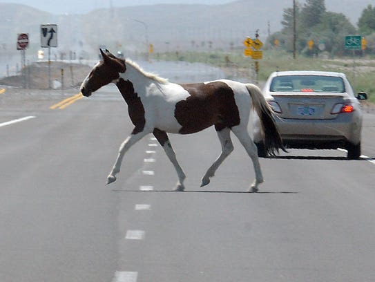 A wild horse crosses U.S. 50 east of Dayton.
