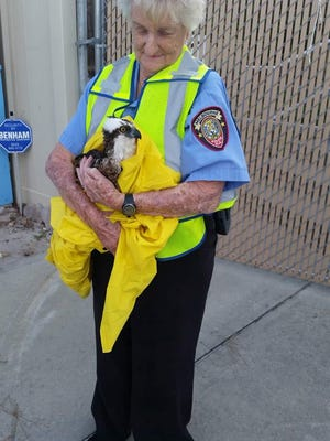 Jean Roberts, a Melbourne volunteer cop, rescued an osprey from the U.S. 192 median.