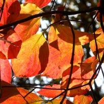 Sunshines through changing leaves.