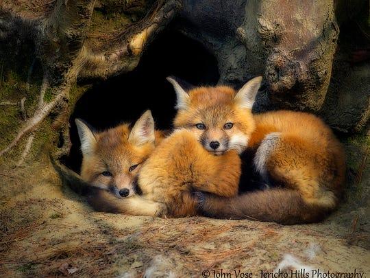 Fox Kits at Rest