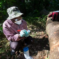 In a Ugandan forest, a Wisconsin scientist searches for unknown viruses that could jump from animals to humans