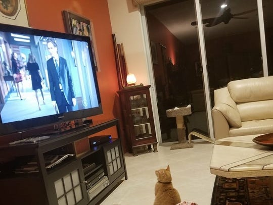 Tommy catches his favorite TV show.