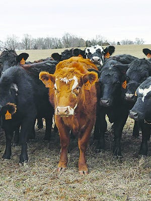 Kansas cattle producers are dealing with a drop in prices from packer buyers as COVID-19 impacts the economy.