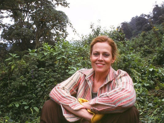 636044604718654207-Sigourney-Weaver-Filming-Gorillas-Revisited.JPG